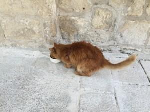 マルタのネコ